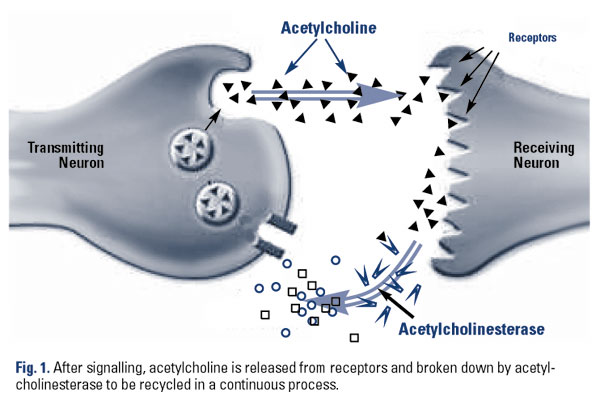 acetylcholine dec.galantamine.fig .11 Neurodegenerative Disease, Hormones and Diet