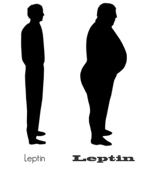 leptin amounts1 Neurodegenerative Disease, Hormones and Diet