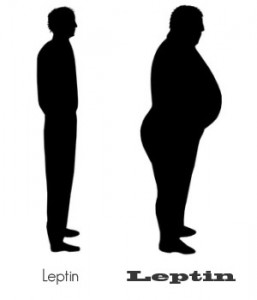 leptin amounts 257x300 New Harvard Study comparing diets.