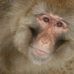 rhesus-monkeys-truth-rosedale-comments
